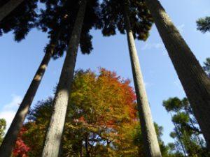 京都の大気です